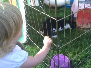 "A petting zoo at the playground! ""Bunny, meet bunny."""